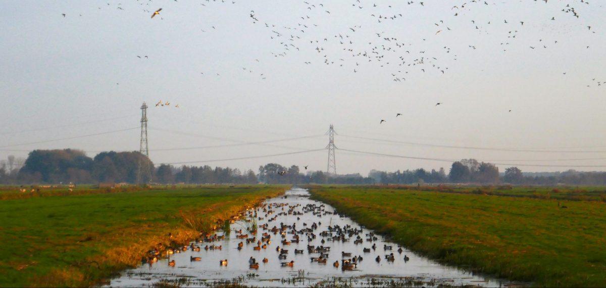 Watervogels watervogeltelling Jaap Graveland